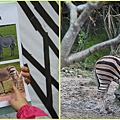 1030205_zoo冬令營平原斑馬