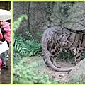 1030207_zoo冬令營雲豹