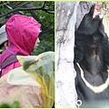 1030207_zoo冬令營黑熊