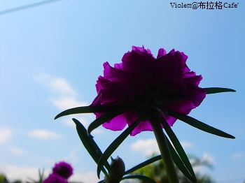 DSC05264p.jpg