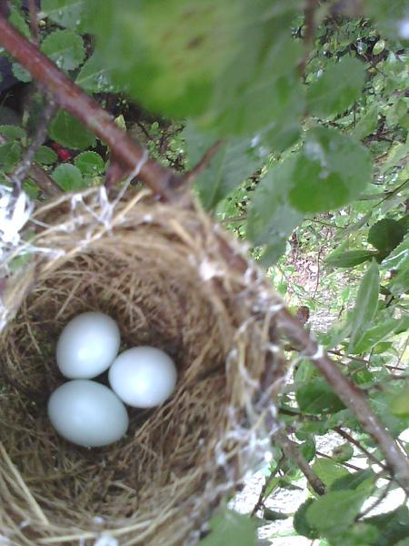 三顆蛋.jpg