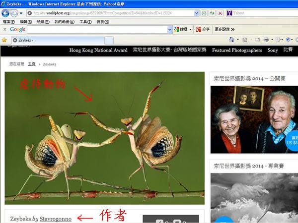 被虐待的螳螂