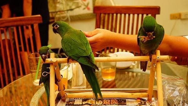 201208 湖口鳥聚3