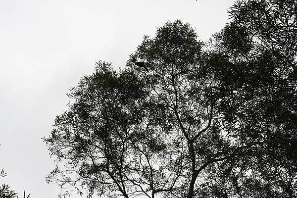 201206 GCT 東風5飛走