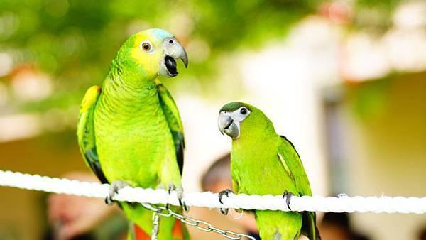 201206鳥聚