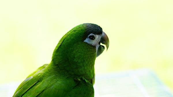 201206鳥聚1