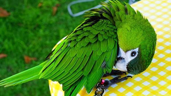 201206鳥聚2
