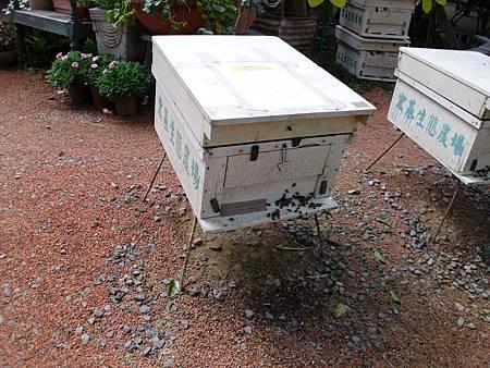 蜜蜂02.jpg