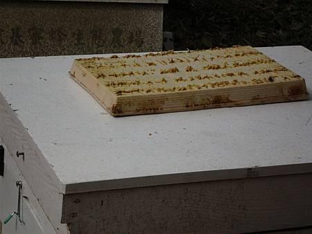 蜜蜂03.jpg