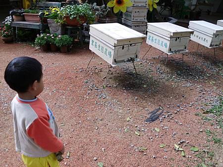 蜜蜂01.jpg