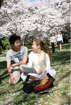 花季時的校園很美呢!.jpg