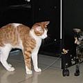 貓舞者1.jpg