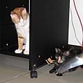 貓舞者2.jpg