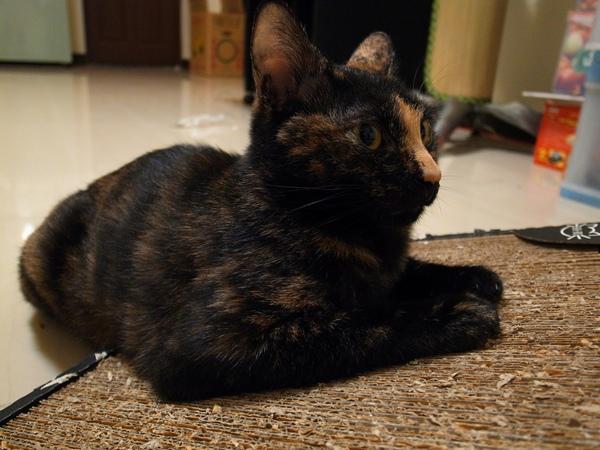 貓抓板091016013.JPG
