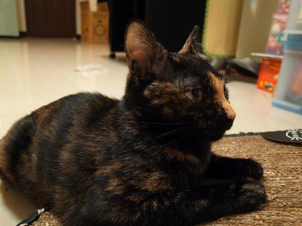貓抓板091016014.JPG