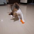 貓草糖3.JPG