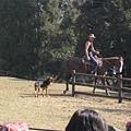 帥氣的牛仔騎著駿馬  旁邊有帥氣的獵犬