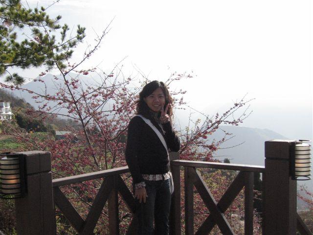 四處都是山櫻花  超美