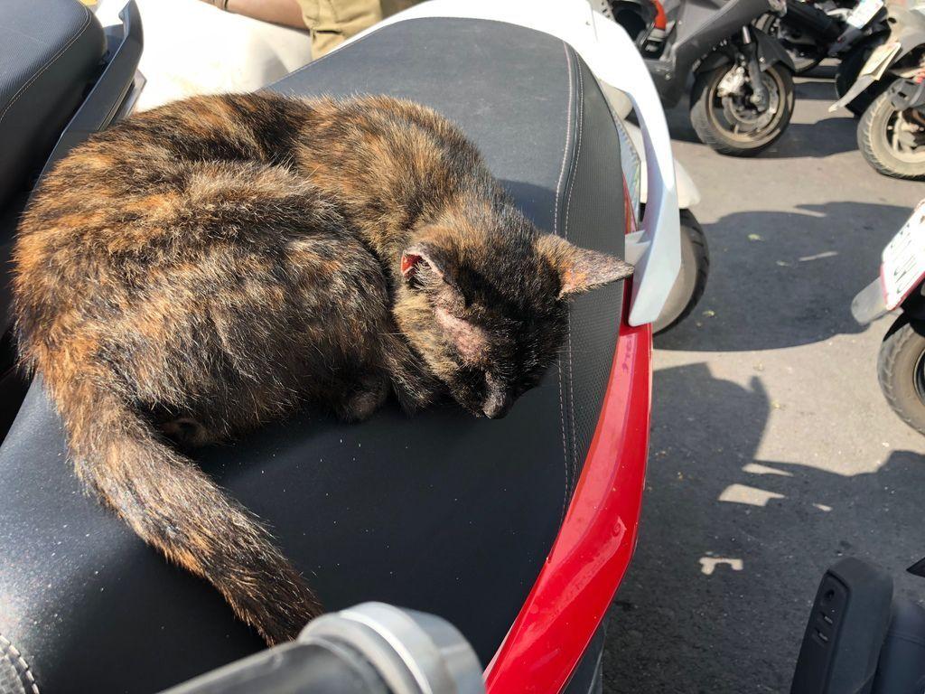 2019-05-05-門口的貓-日常-001.jpg