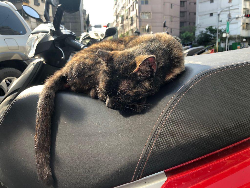 2019-05-05-門口的貓-日常-002.jpg