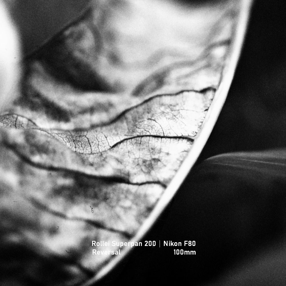 Rollei Superpan 200|Nikon F80|greensheep|SQ|04.jpg