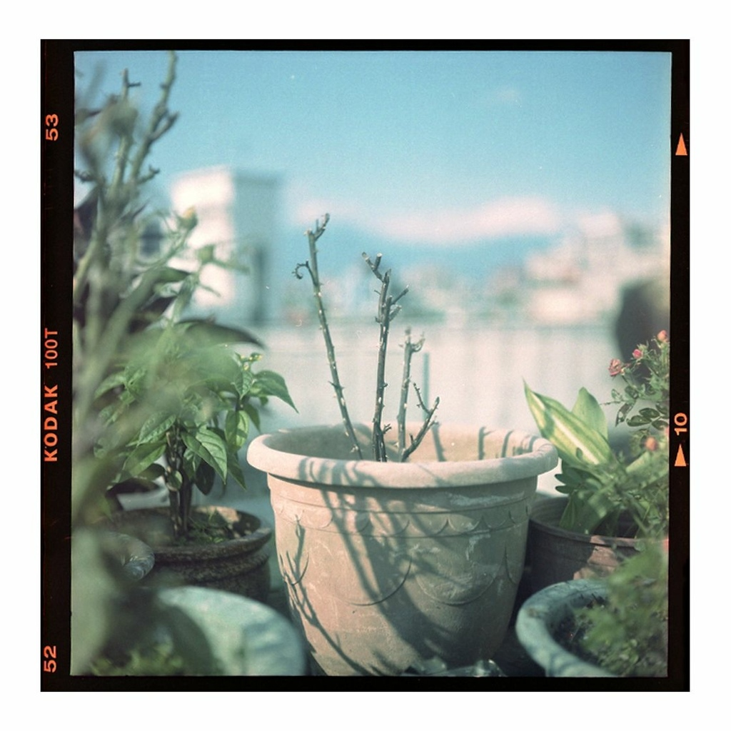 2021-06-01 中片幅 Kodak 100T 邊框 均衡.jpg