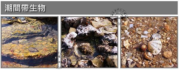 潮間帶生物1.jpg