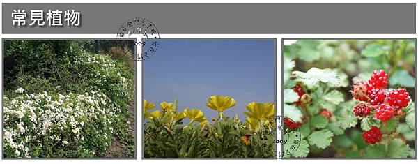 常見植物2.jpg