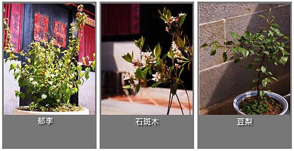 天井原生植物.jpg