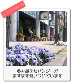 春天的北山街道花朵盛開
