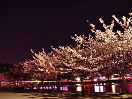 arashiyamasakura12.jpg