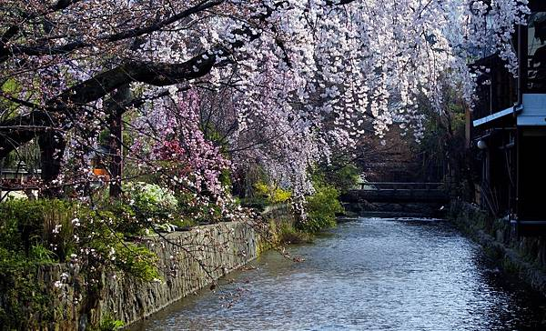祇園・白川①.jpg