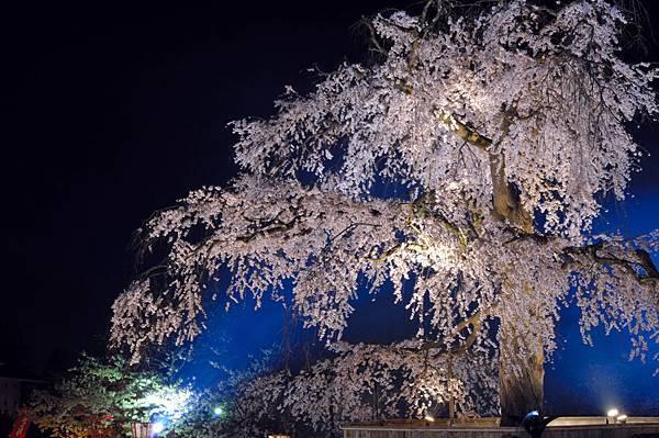 円山公園③web-京都いいとこマップ.jpg