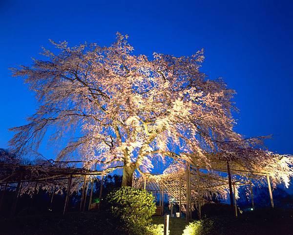 円山公園①.jpg