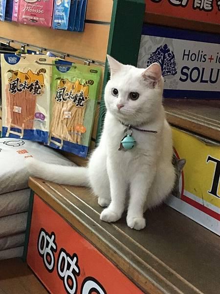 寵物用品店店貓