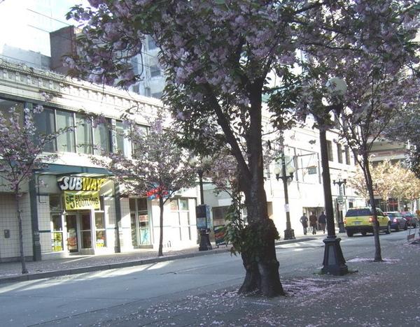 西雅圖-清晨的落花