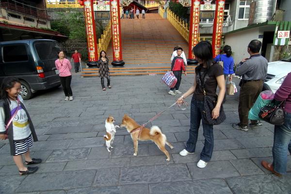 南庄永昌宮遇到不嫌棄的狗