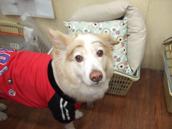 竹北寵物王國裡名叫妞妞的狗