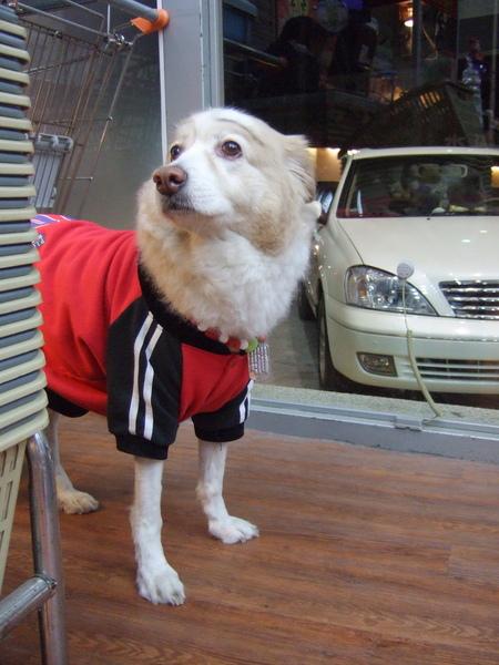 竹北寵物王國遇到名叫妞妞的狗