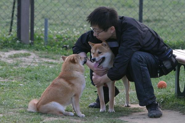 誰家的狗.jpg