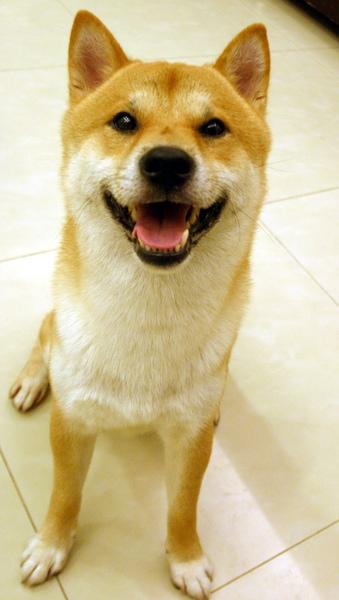 愛笑Yama.jpg