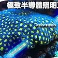24V-aquarium-light-tubes