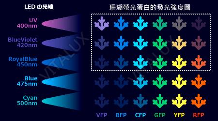 Fluorescence-Protain