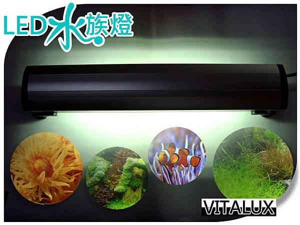 growlight-LED-1fta