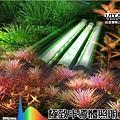 High-CRI-Aquarium-led-lights