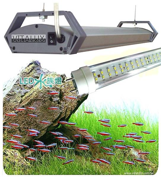 led-drop-light-aquarium