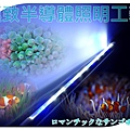 vitalux-aquarium-led-tube