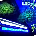 vitalux-reef-led-retrofit