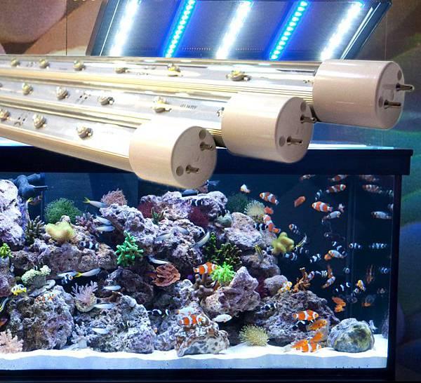 vitalux珊瑚LED燈管