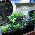 橫插LED水族燈泡